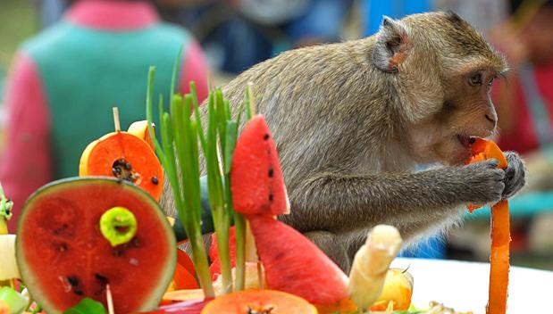 Monkey Buffet Festival in Lopburi